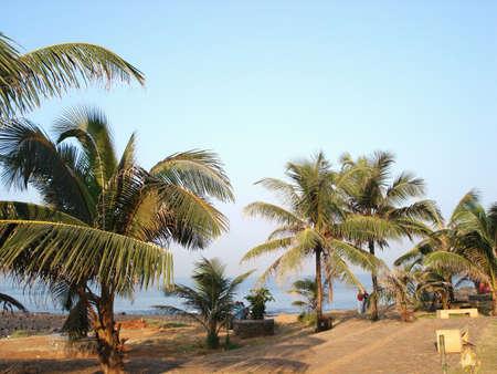 Palm trees along the beach at Mumbai