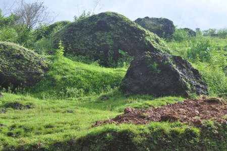 Grass growing on rocks after rainy season