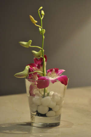 An orchid presentation Stock Photo