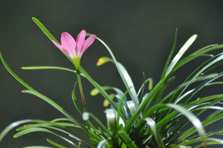 A beautiful wild lilly