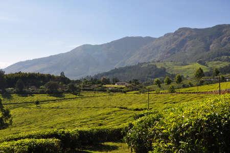 munnar: The nilgiri mountains on a beautiful morning