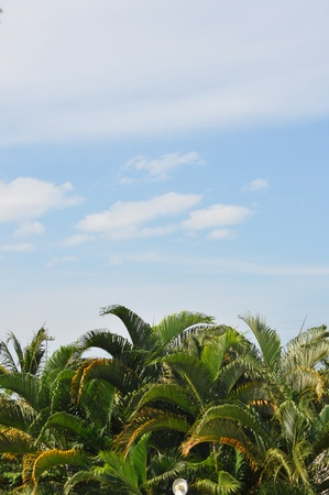 Kerala skyline Stock Photo