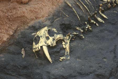 Prehistoric Bones in Rock photo