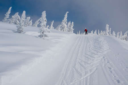 Alpine slope with pine tree covered snow Stock Photo - 4578444