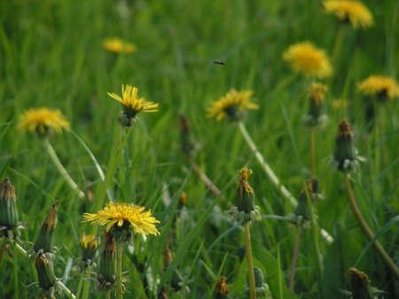 fervour: Summer flowers