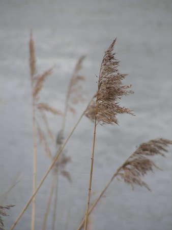 solter�a: Primavera. La vieja hierba.