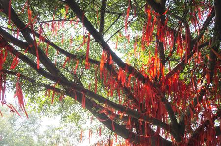 wishing: Wishing Tree Stock Photo