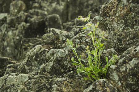 ballad: Plant