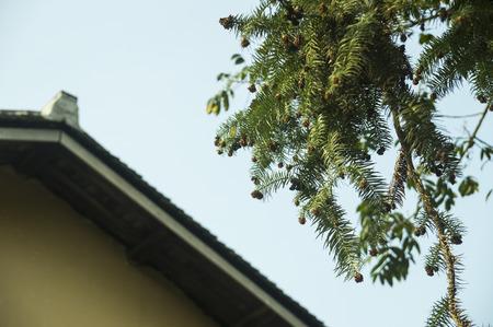 ballad: plants