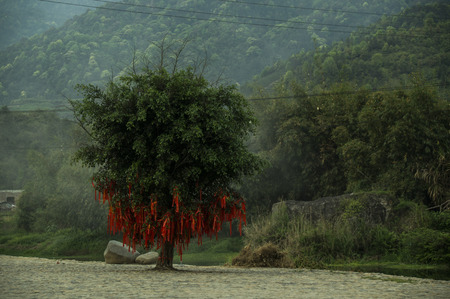 ballad: Knot plants