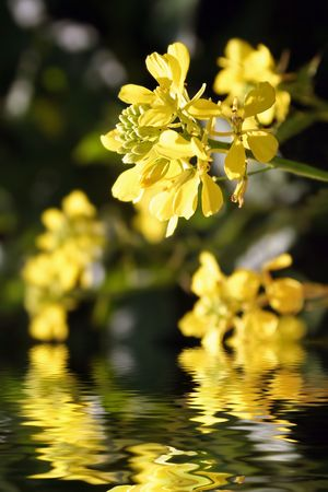 Flower reflections in water photo