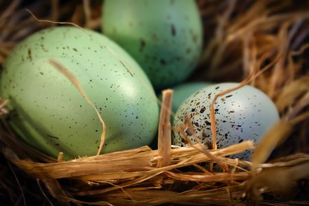 Easter eggs in an easter basket photo