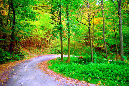 road autumnal: photograph of the winding road in the autumnal forest