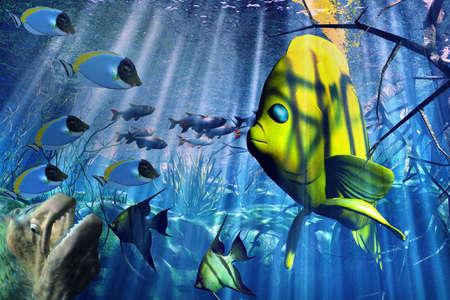 pterophyllum scalare: Underwater Stock Photo
