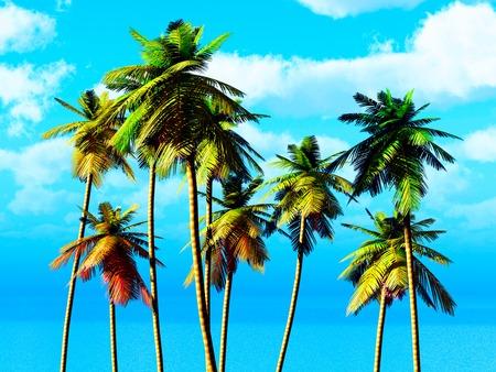 solitariness: Coconut grove on tropical tiny island