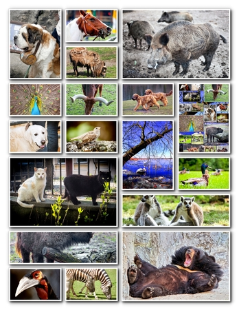 Animal collage with various species Stock Photo - 23332267
