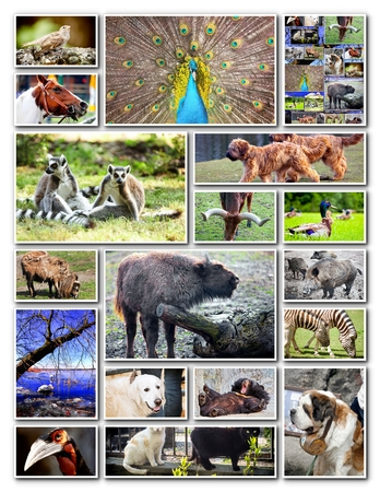 Animal collage with various species photo