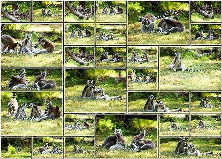 Cute lemur kata living in a group photo