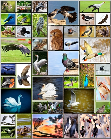 pigeon owl: Collage of various species of birds Stock Photo