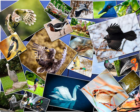 Collage of various species of birds photo