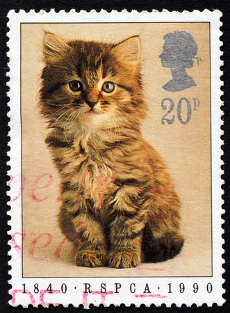 Stamp printed in England showing a cat, circa 1990 photo