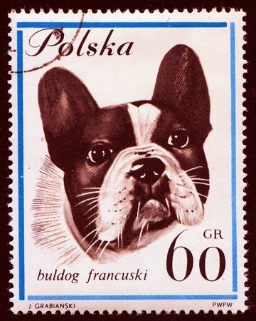 postmark: Dog on Polish postmark from 1963 Stock Photo