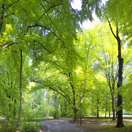 meditative: Lush forest in spring time