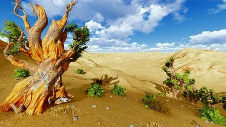Joshua trees photo