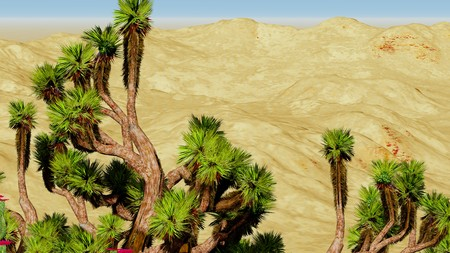 joshua: Joshua trees