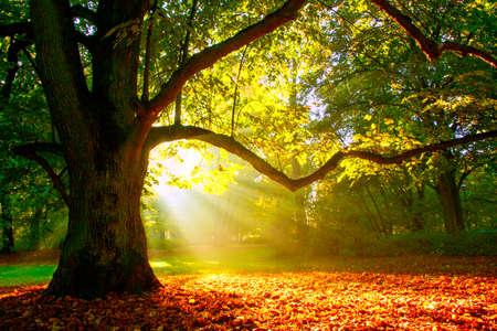 foliage tree: Mighty oak tree