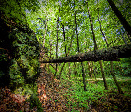 Primeval forest photo