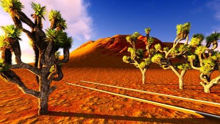 joshua: Joshua trees and railroad