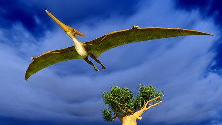pterodactyl: Flying pterodactyl Stock Photo