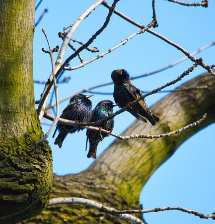trees photography: Three cuties singing Stock Photo