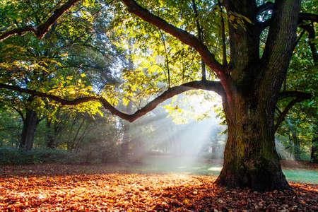 tree  oak: poderoso roble