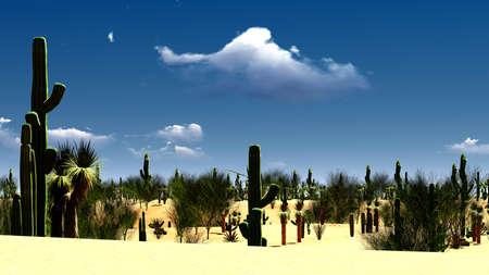 desert sand: American desert at beauiful sunset Stock Photo
