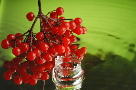 guelderrose: Guelder-rose, water and ice