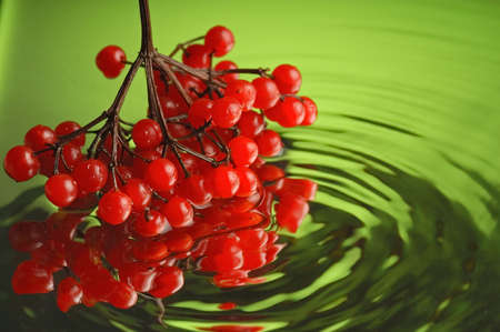 guelderrose: Guelder-rose, water and mirror