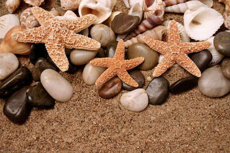 gritty: Assortment of starfish and seashells in the sand Stock Photo