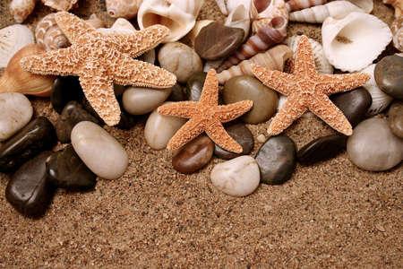 emotive: Assortment of starfish and seashells in the sand Stock Photo