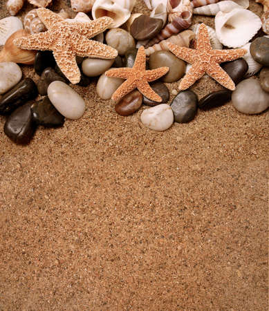 Assortment of starfish and seashells in the sand - copy space Stock Photo
