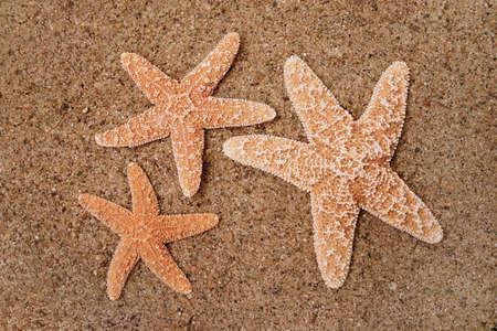 Starfish in the sand Stock Photo - 230900