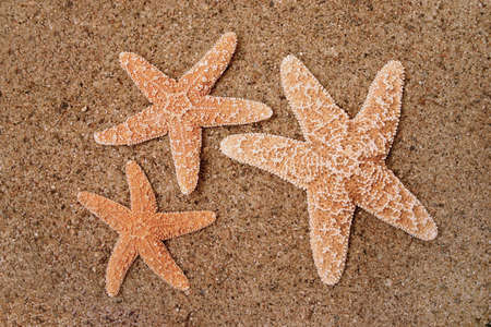 gritty: Starfish in the sand