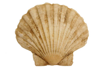 Isolated seashell Stock Photo