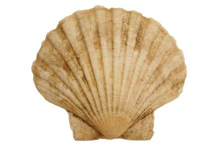 environmen:  Isolated seashell Stock Photo