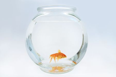 Goldfish in bowl