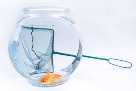 confined: Goldfish and fish net