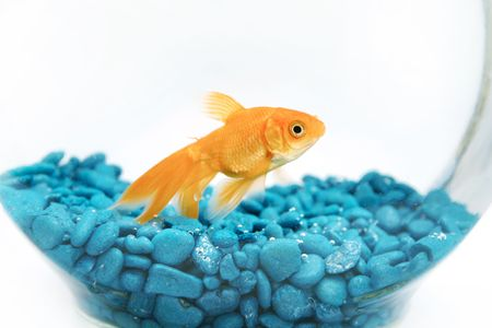 Goldfish in bowl photo