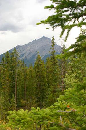 rockies: Rockies in Banff, Alberta (Sulpher Mountian)