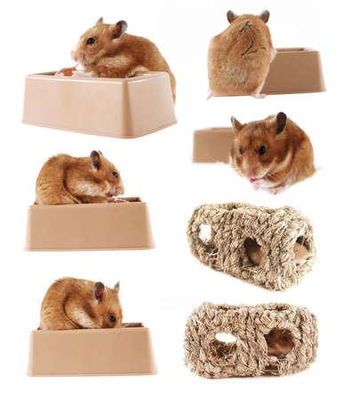 munch: Pet hamster series
